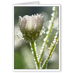 Single Blank 5x7 card and Env - Jareckie Designs® Blank Macro Photo 5x7 Cards - Newest